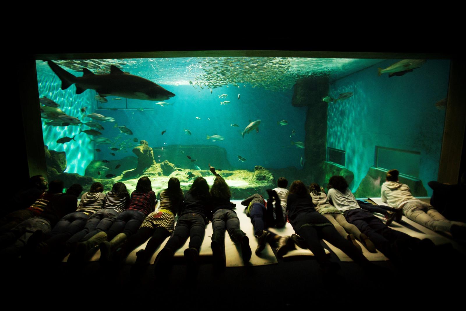 El giraldillo eventos recomendados para el 28 de mayo en - Entradas acuario sevilla ...